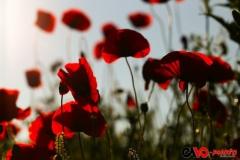 201405_flower_02_rd