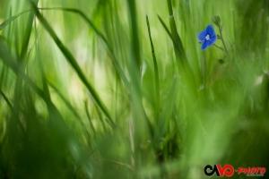 2017-05 Caché dans l'herbe