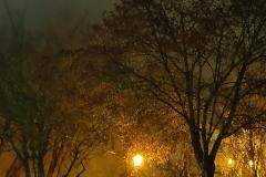 201811_nuit_et_brouillard_rd_11